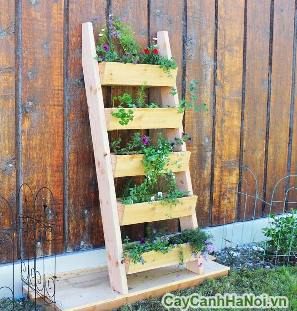 cách tạo vườn thẳng đứng