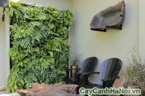 cây trên tường