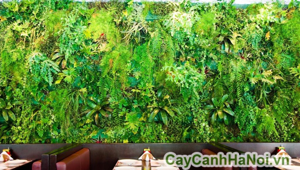 cây trồng tường xanh