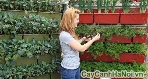 chăm sóc vườn treo tường