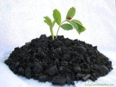Những lưu ý khi chọn đất trồng tường cây