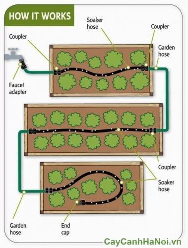 hệ thống tưới tự động tường xanh