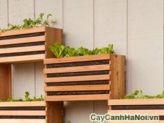 làm vườn đứng đơn giản