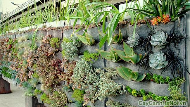 lợi ích vườn trên tường