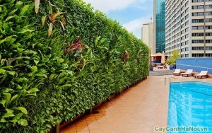 lợi ich vườn trên tường