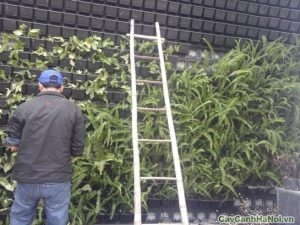 modul vườn tường