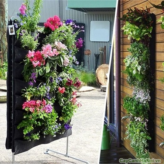 phân loại vườn trên tường