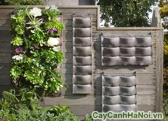 thi công vườn tường