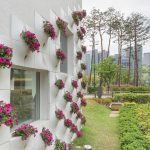 thiết kế tường cây