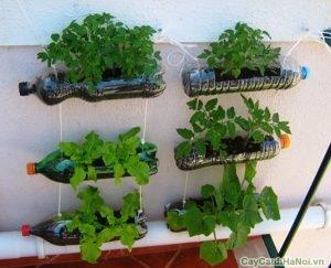 trồng cây trên tường
