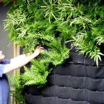 trồng cây trên tường bằng túi vải