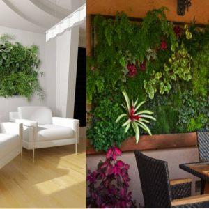 trồng cây trên tường đứng