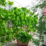 trồng cây trên tường nhà phố