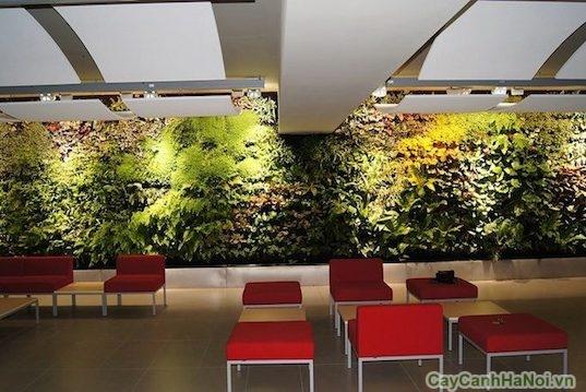 tường cây nhà hàng