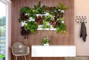 thiết kế tường cây salon tóc