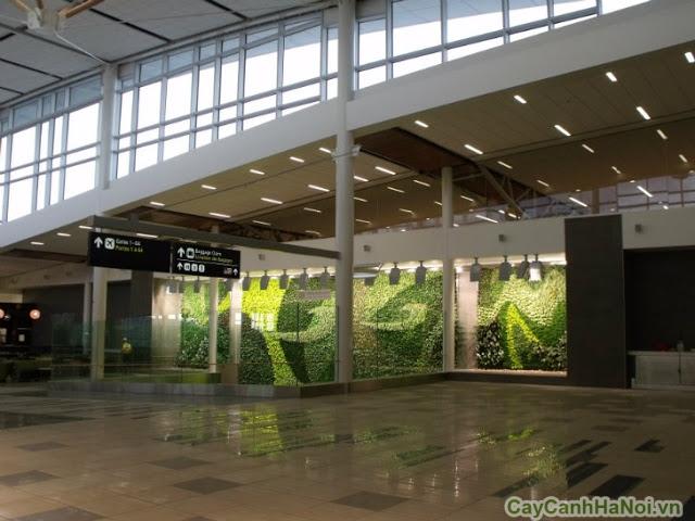 tường cây của sân bay