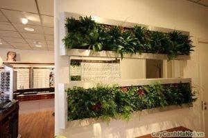 tường cây showroom