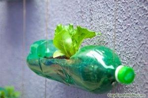 tường cây xanh xã hội