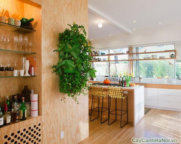 tường cây xanh