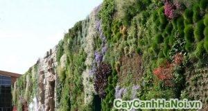 vườn treo tường trong nhà
