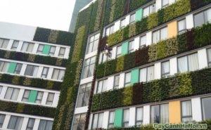 vườn tường trong bệnh viện