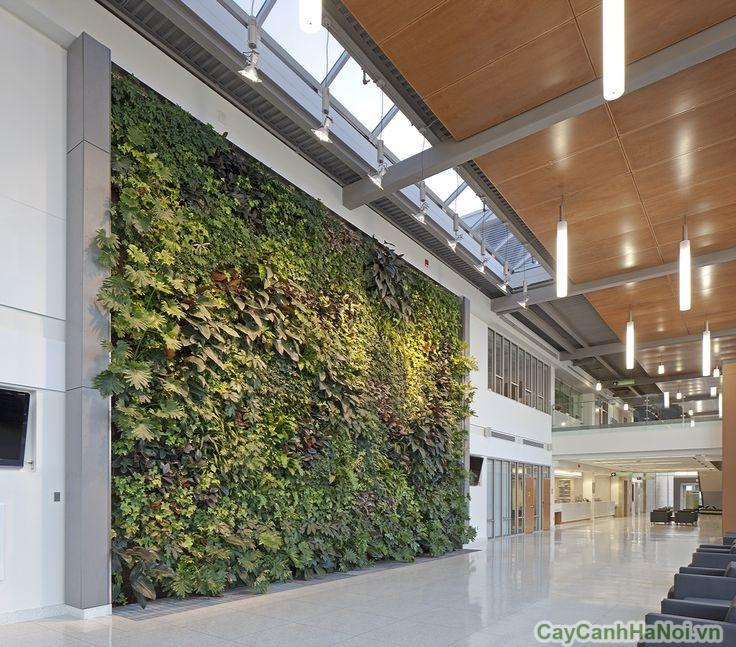 vườn treo tường trong bệnh viện