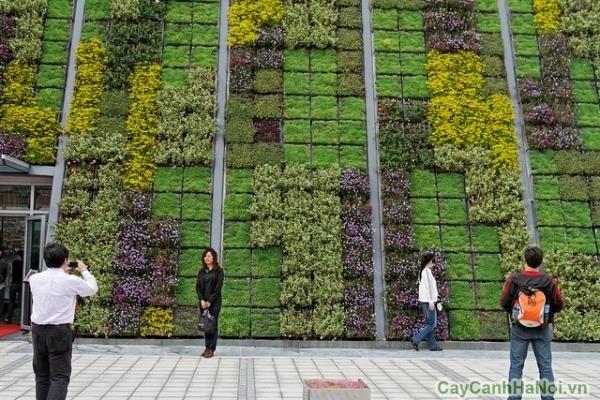 vườn tường công cộng