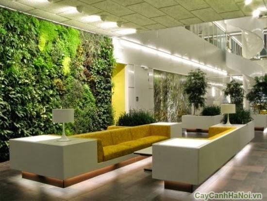 vườn tường khách sạn