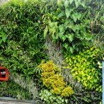 vườn tường là gì