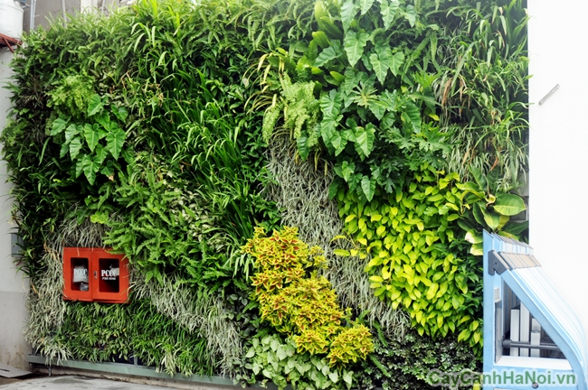 Bạn hiểu như thế nào về vườn tường?