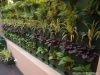 giải pháp vườn tường rau sạch