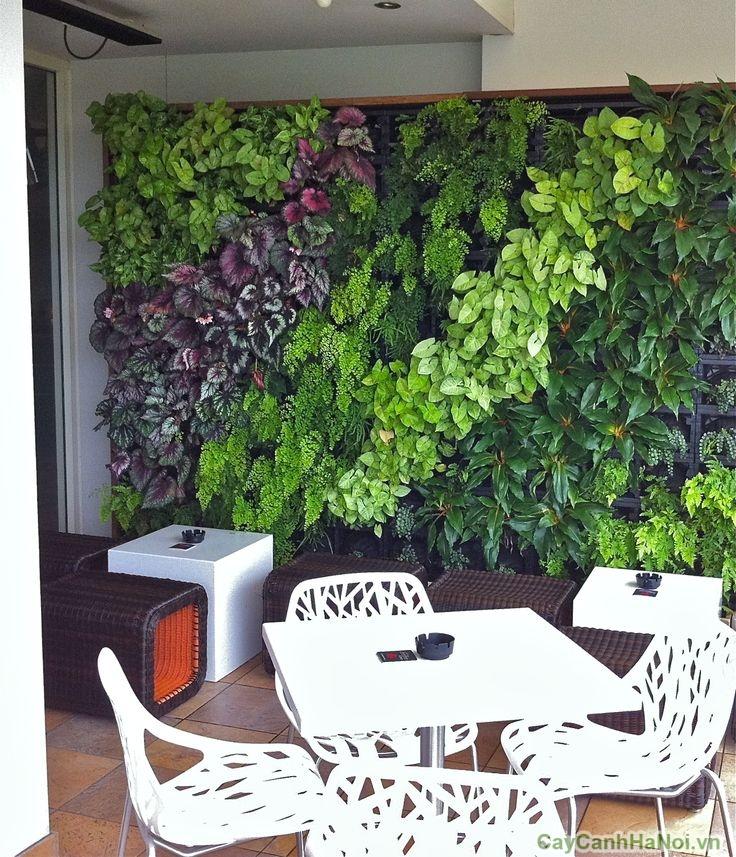 vườn tường rau xanh nhà hàng