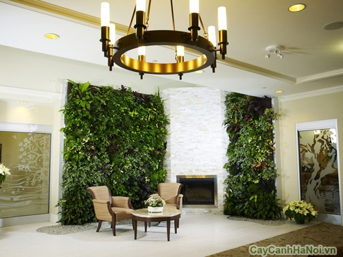 vườn tường trong nhà