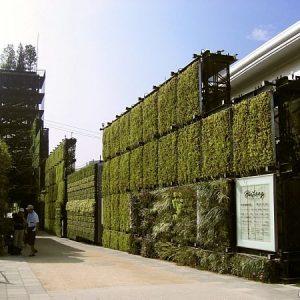 bức tường xanh Châu Á