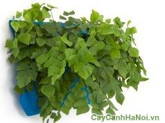 cách trồng cây trên tường cực dễ