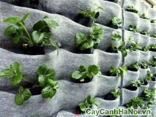 kỹ thuật làm vườn thẳng đứng