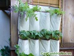 modul vườn đứng