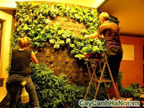 trồng cây treo tường