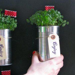 trồng cây trên tường nhà